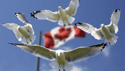 kanadská vlajka