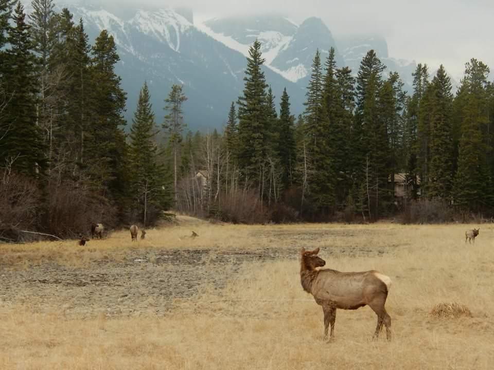 Kanadská divočina