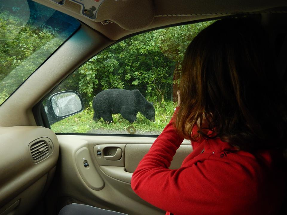 Medvěd v Kanadě
