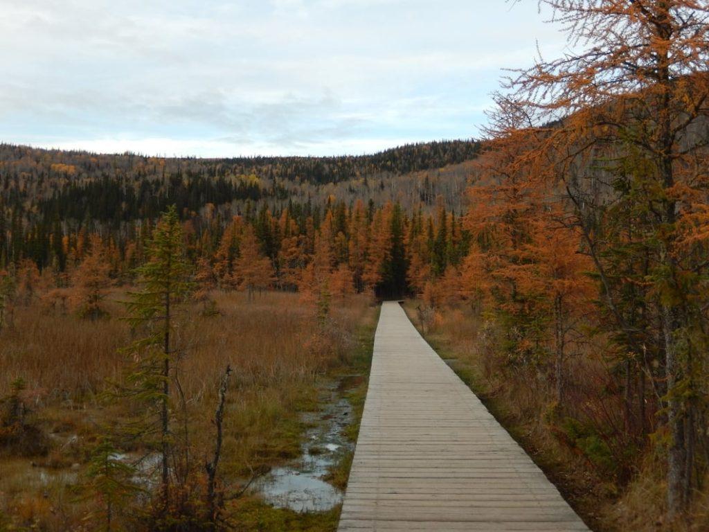 Cesta k Liard Hot Springs