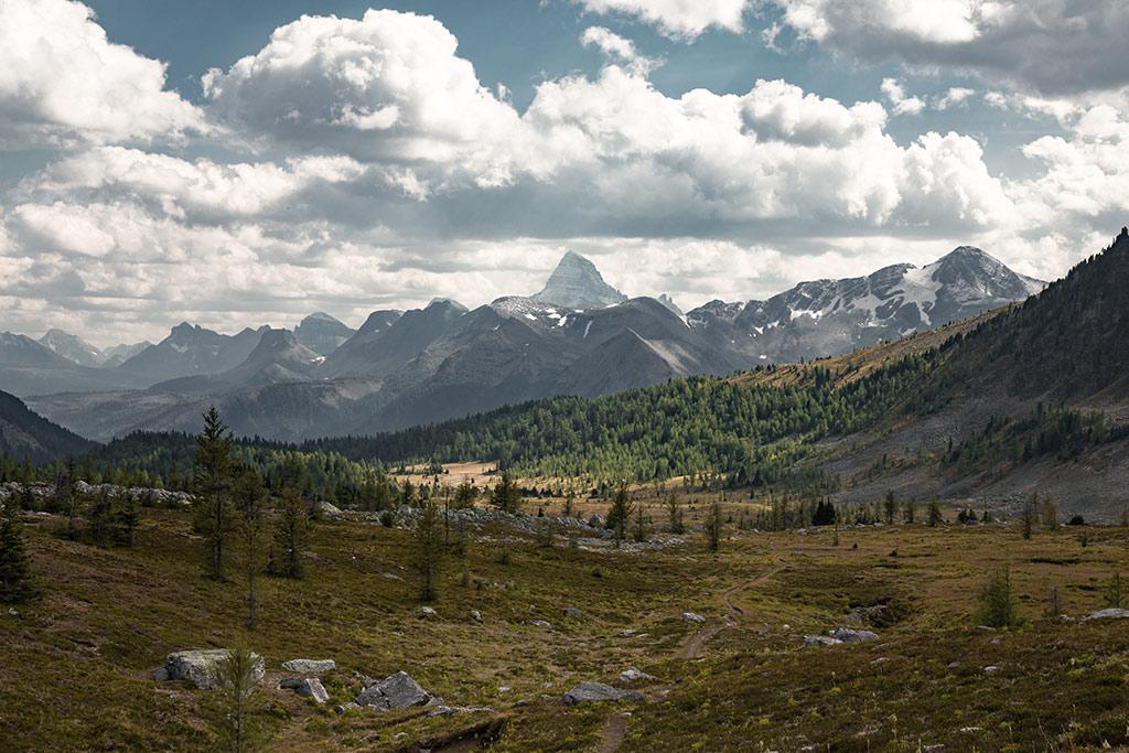 Výhled na Assiniboine v popředí s horskými loukami