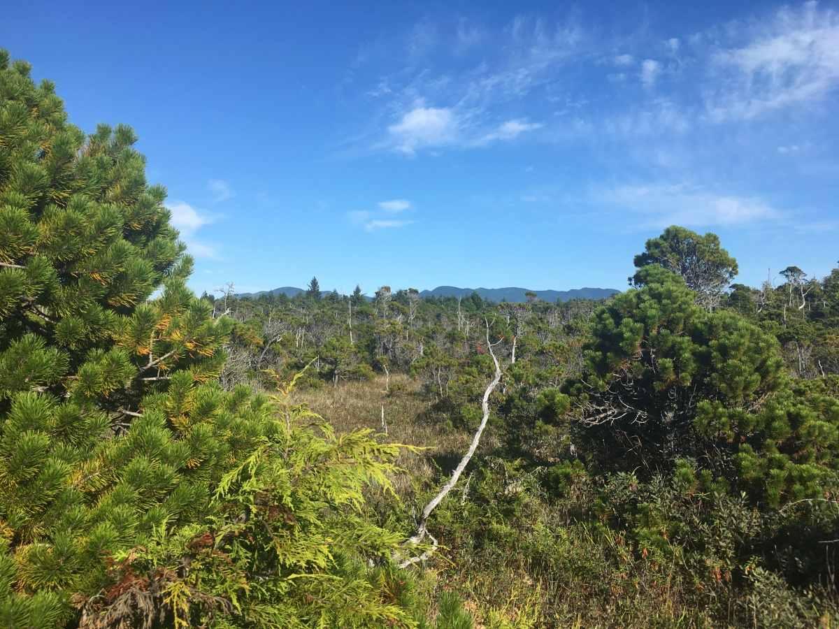bog trail