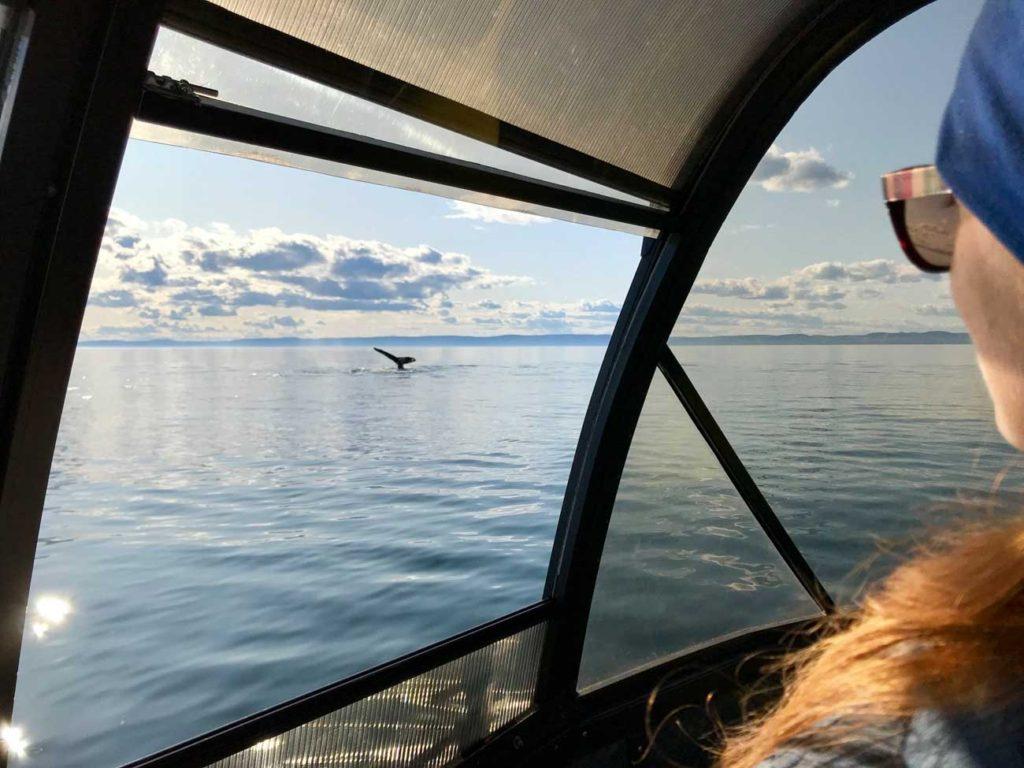 Rozhovor s Tomem a Kiki - pozorování velryb
