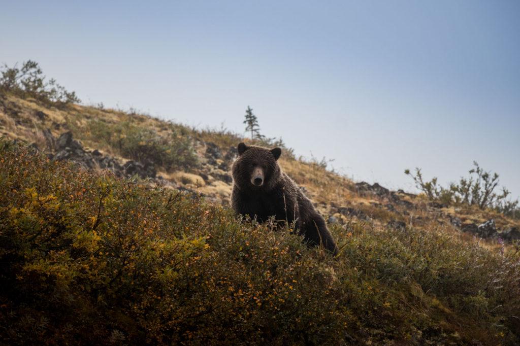 Rozhovor Marek Rybář - Grizzly bear