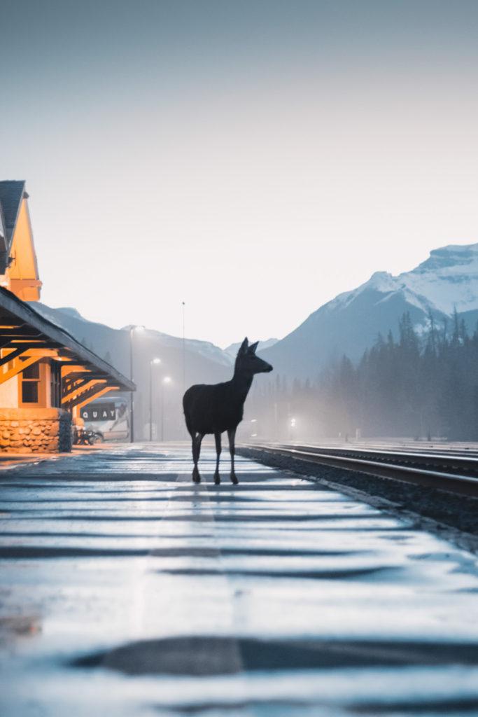 Rozhovor Marek Rybář - working holiday v Kanadě