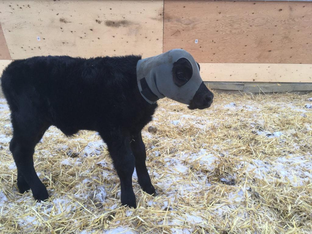 Podcast Monča - práce a život na farmě