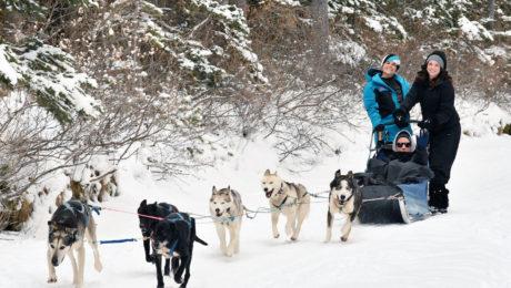 musher kanada psí spřežení